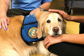 Garrison sniffs for a therapy dog