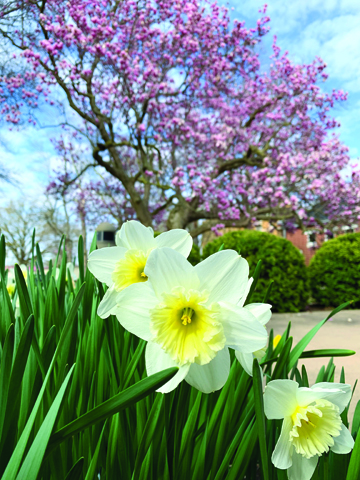 In spite of the inconsistent temperatures throughout the month of March, spring is showing its magic in early April.