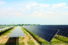 Solar Farm at Freeman Seed