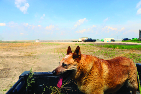 Photos/Kyla Hurt Bailey, dog of Jon and Sue Freeman, went to work at Freeman Seed that day, happily joining on the Gator as we toured the solar farm perimeter.