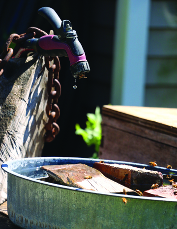 "Photos/Kyla Hurt  Glaenzer has dubbed this, ""The bee watering hole,"" a setup he's made in his backyard."