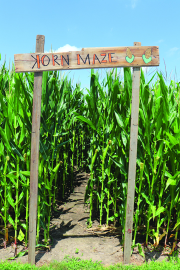 THE CORN PATCH ADVENTURE AND A LOCAL FALL FESTIVAL