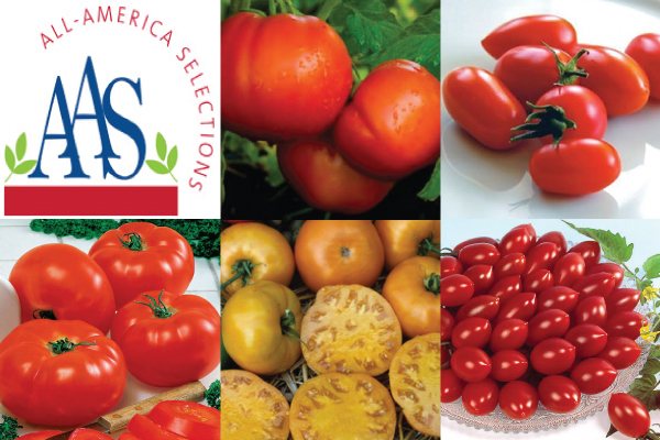2017 AAS fruit and vegetable award winners