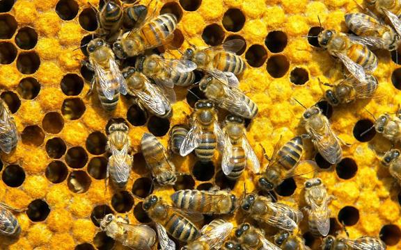 Beginning Beekeeping course