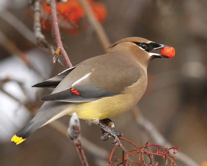 Bird tales – a unique autumn visitor