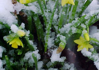Plants and cold temperatures