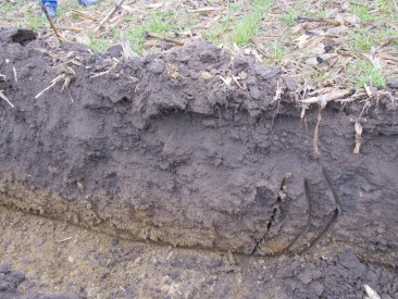 Soil Health and Cover Crops