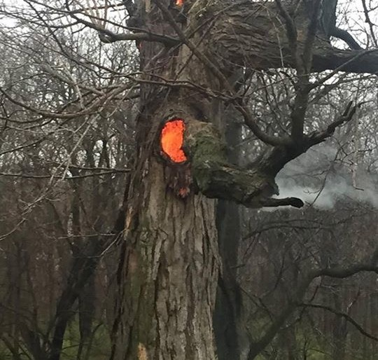An old tree on a farm west of Jacksonville was struck by lightning and burned from the inside.  Photo:  Gary Hadden
