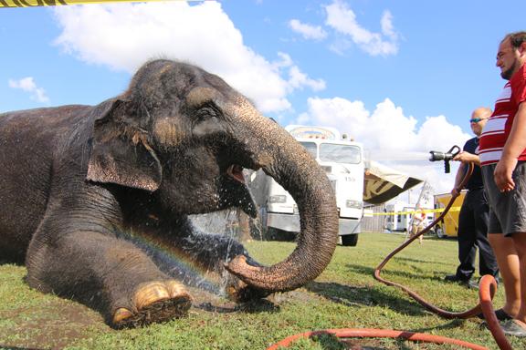 Scrubbing The Elephants