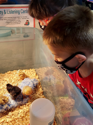 One of the incubator kits in use in an area classroom.
