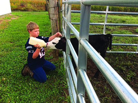 Roegge takes time to bottle feed one of the calves.
